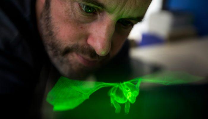 3D Volumetric Display - Green Dragon